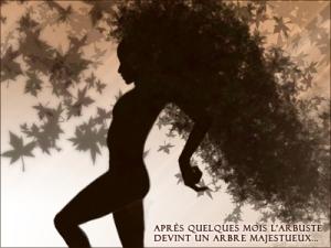 Illustration: Imagination fertile (l'arbuste devient un arbre majestueux...)